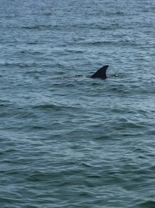 I promise, that's a dolphin. Trust me, it doesn't look like it when you're actually in the water with it!