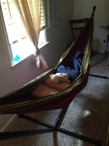 Yup, in my office. You've arrived in the world of employment when you have a hammock behind your desk.